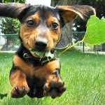 Pets Can Reduce the Stress of Cancer Treatment