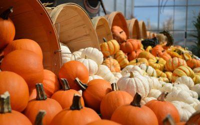 Go Orange on National Pumpkin Day