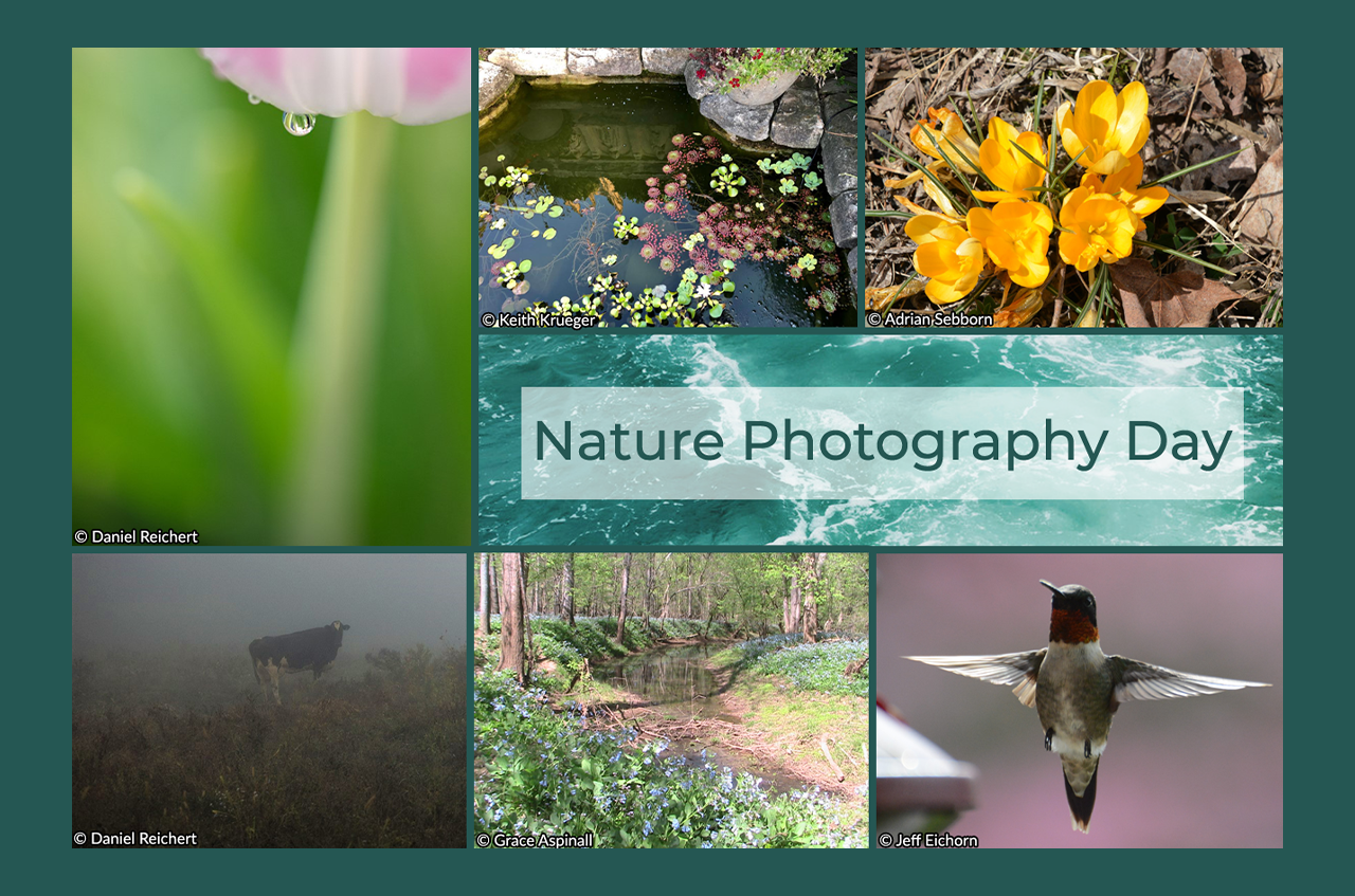 Finding Something New in the Familiar: The Majestic, Intimate Beauty of Nature Photography